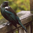 Tui.....I'm wet and cold and the service in this place is so slow.....! by Roy  Massicks