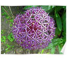 Spikey Lilac Garden Ball Poster