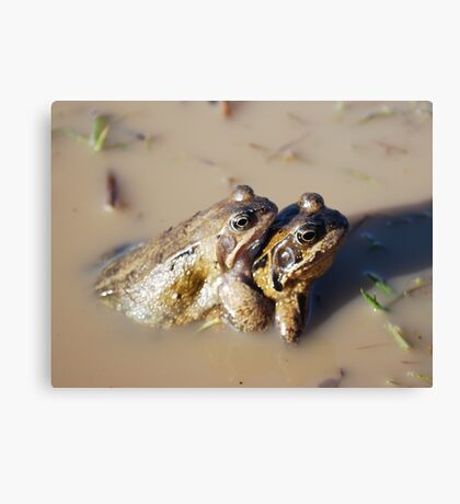 Give us a cuddle! Canvas Print