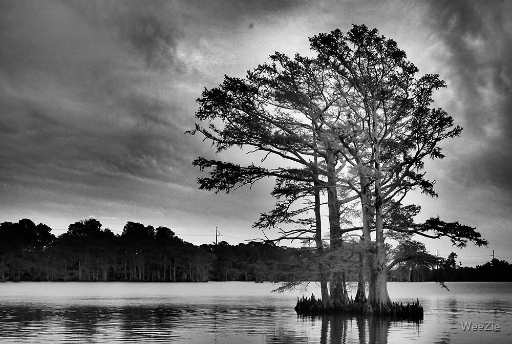 Cypress Tree by WeeZie
