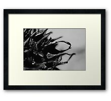 Nature 1 Framed Print