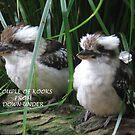 Kookaburras (Australia) by Karen Duffy
