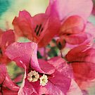 Bougainvillea at Sunset by micklyn