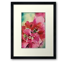 Bougainvillea at Sunset Framed Print