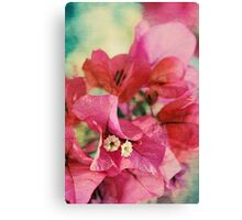 Bougainvillea at Sunset Canvas Print