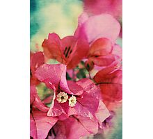 Bougainvillea at Sunset Photographic Print