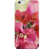 Bougainvillea at Sunset iPhone Case/Skin