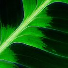 Tropical Leaf by Robyn Carter