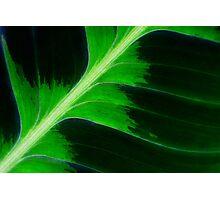 Tropical Leaf Photographic Print