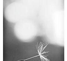 Fragile nature... by JonFairriePhoto