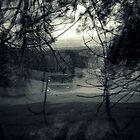 Swan Lake by Ben Loveday