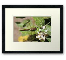 Dragonfly on Orange Tree Framed Print