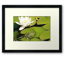 Frog and Water Lily Framed Print
