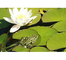 Frog and Water Lily Photographic Print