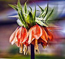 Fritillaria by Wib Dawson