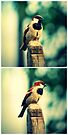 Birdie Collage by tropicalsamuelv