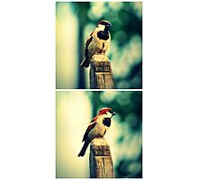 Birdie Collage Photographic Print