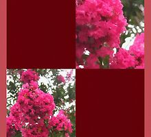 Crape Myrtle Blank Q10F0 by Christopher Johnson