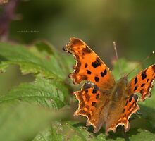 """ Beneath Your Wings,  The Comma Butterfly "" by Richard Couchman"