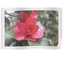 Pink camellia flower photography. Poster