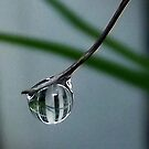Life in a drop by iamelmana