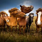 Posing Ponies by LJWPhotography