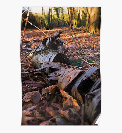 Fallen bark Poster