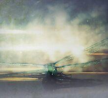 dragonfly macro 2 by Dawna Morton
