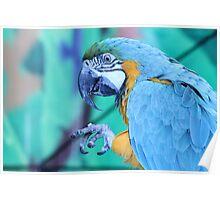 Parrot waving bye Poster