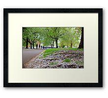 Spring Flower boom  Framed Print
