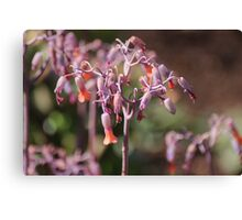 South Africa - wild flowers Canvas Print