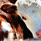 Close-up Calf by Bami