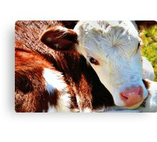 Close-up Calf Canvas Print