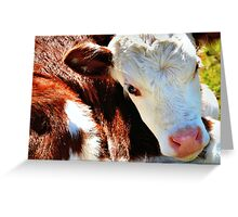Close-up Calf Greeting Card