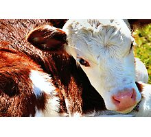 Close-up Calf Photographic Print