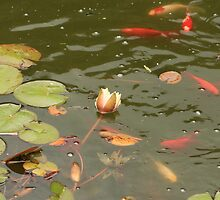 Koi and Water Lilies by rhamm