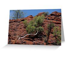 in Cycad Gorge - looking up  Greeting Card
