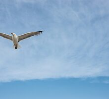 ...learning to fly... by urbe53