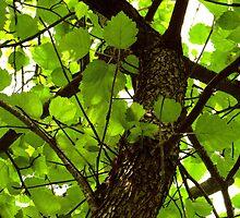 Autumn Glory Hawthorn by SRowe Art