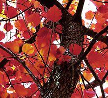 Autumn Glory Hawthorn - Crimson by SRowe Art