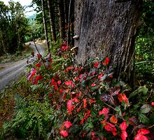 The Narrow Road by Charles & Patricia   Harkins ~ Picture Oregon