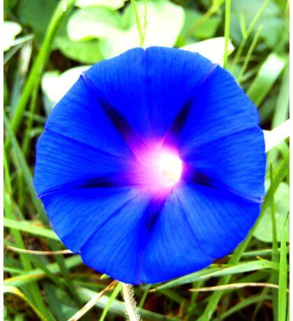 blue  2 Sticker