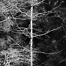 Bare Oak Tree by Geoff Smith