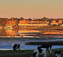 The Waterfront, The Moon, and The Cows in Yarmouth by Debbie  Roberts