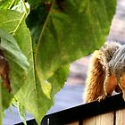 Squirrel on the Fence (2) by CORA D. MITCHELL
