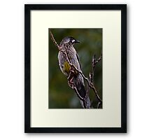 Caught a Bug Framed Print