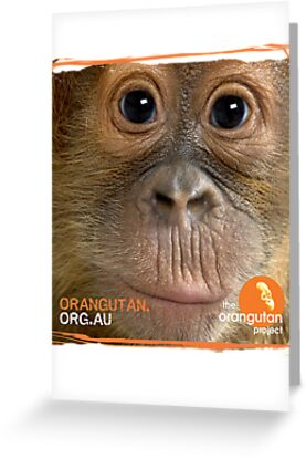 Orangutan Eyes - Windows to their Soul by The Orangutan Project