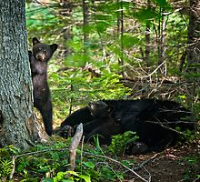 Curious Siblings. Black Bear Cubs. by jsinon