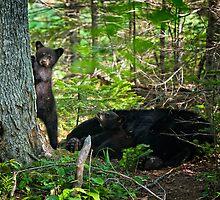 Curious Siblings. Black Bear Cubs. by jsinon