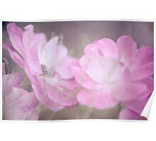 Whispering Wild Roses Poster